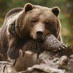 Aprobado el Nuevo Catálogo de Especies Amenazadas