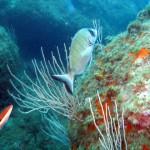 Expertos reclaman protección para el Mediterráneo