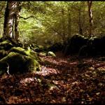 Los bosques españoles, un tesoro muy valioso