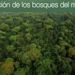 Situación de los Bosques en el Mundo