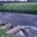Reutilizan agua residual para el riego y generación de biodiésel
