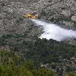 """""""Árboles padre"""" suministrarán semillas tras un incendio en la Comunidad Valenciana"""