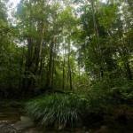 Bosques más densos, más eficientes en la fijación de CO2