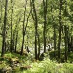 Los bosques de Castilla y León en fase de recuperación