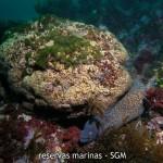 Descubren un nuevo arrecife de coral Mediterráneo