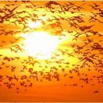 """SEO/BirdLife presenta una plan de medidas """"Por un futuro renovable"""""""