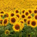 Bruselas autoriza siete sistemas de sostenibilidad para biocombustibles