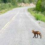 La fragmentación del paisaje, gran amenaza para la biodiversidad