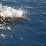 """España debe """"hacer los deberes"""" para proteger sus mares"""