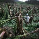 Nuevas preocupaciones ambientales de los consumidores