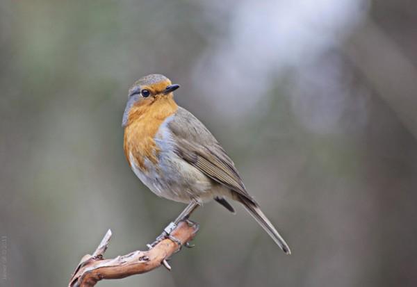 SEO/Birdlife celebra este fin de semana el día de las Aves. Foto: Javier Gil