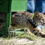 Reclaman una auditoría en programas de reintroducción de especies amenazadas
