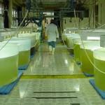 Microalgas: La energía del fondo del mar