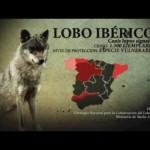 Especies amenazadas en la Península Ibérica