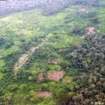 Los bosques, vitales para el desarrollo humano de África