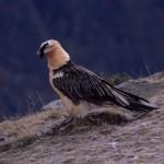 MARM nombra un centenar de asesores sobre especies amenazadas