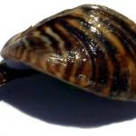 Listado y catálogo español de especies exóticas invasoras (I)