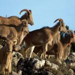 Listado y catálogo español de especies exóticas invasoras (II)