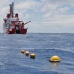 El cambio climático afecta a la fauna marina del Golfo de Cádiz
