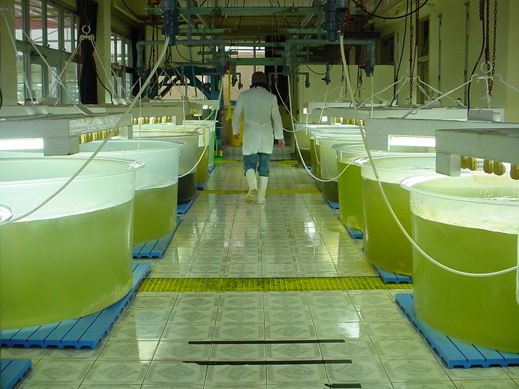 Iii congreso latinoamericano de biotecnolog a algal claba 2012 comunidad ism - Como se planta el bambu ...