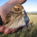 La Xunta concreta nuevos planes de recuperación de especies amenazadas