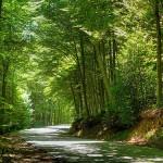 Actividades ambientales 24 – 26 de Febrero