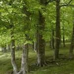 Actividades ambientales 16 – 19 de Marzo