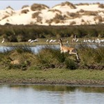 Medio Ambiente rechaza el proyecto de la Refinería Balboa y el oleoducto