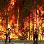 Casi la totalidad de los incendios forestales son culpa del hombre