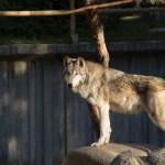 El papel de los zoológicos en la conservación de la Biodiversidad