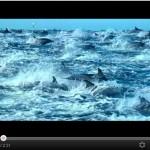 Biodiversidad 2012 : Océanos