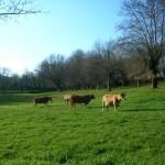 La Xunta de Galicia promoverá la conservación del paisaje gallego mediante acciones educativas