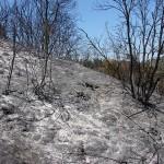 Un nuevo producto con bacterias ayuda a la recuperación del suelo quemado