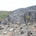 El 85% de la superficie calcinada en el incendio de Valencia es Red Natura 2000
