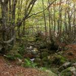 Castilla y León crea un proyecto para apadrinar bosques