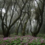El fuego pone en peligro la laurisilva y el palmeral canario