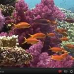 Maravillas del fondo del mar