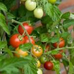 España a la cabeza de la UE en hectáreas dedicadas a la agricultura ecológica
