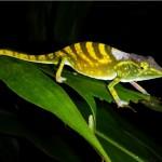 Las 100 especies más amenazadas. ¿Sin valor, o de un valor incalculable?