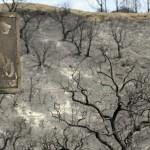 Se realizarán actuaciones urgentes de restauración ambiental en la zona afectada por el incendio de Coín