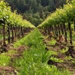 Aprobado un marco de actuación para fomentar el uso sostenible de los productos fitosanitarios