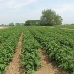 La agricultura ecológica mejora la absorción del carbono atmosférico en el suelo