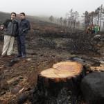 Comienza la reforestación en la Sierra Oeste de Madrid