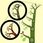 Científicos británicos y estadounidenses crean el primer árbol de la vida digital