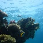 Cerca de un millón de especies pueblan el océano