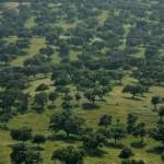 """El proyecto """"BioDehesa"""" promoverá la gestión sostenible de las dehesas andaluzas"""
