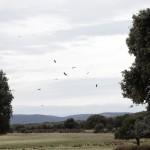 La Red Natura 2000 celebra su 20 aniversario