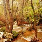 Actividades ambientales 7 – 9 de Diciembre