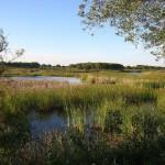 Aprobada la producción y almacenamiento de gas natural en Doñana