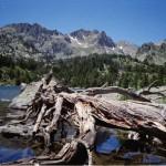 WWF denuncia ante la Comisión Europea que España incumple la red Natura 2000